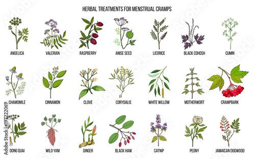 Fotografiet  Best herbs for menstrual cramps treatment