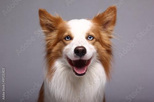 Tablou Canvas Beautiful dog
