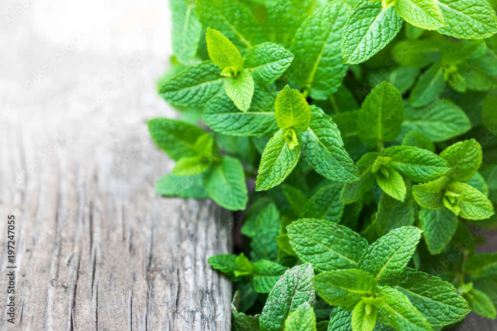 Fototapety, obrazy: Fresh mint leaf,  lemon balm herb on wooden background with copyspace, close up.