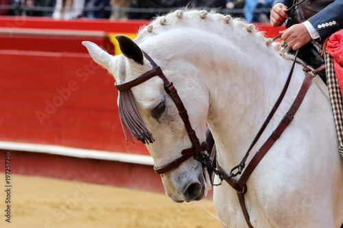 Fototapeta caballo obraz