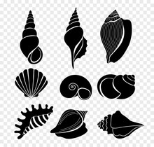 Vector Illustration Set Of Seashells Silhouettes Isolated On Transparent Background.