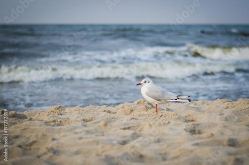 Ostseestrand am Morgen