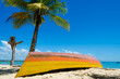 Colorful canoe upside down in the sand. A coconut tree, a dry log and a beautiful blue sky compose the scene.