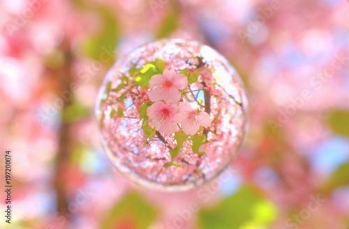 Tuinposter Lichtroze 河津桜 葉桜を閉じ込めて
