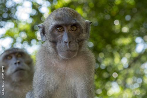 In de dag Aap little monkey