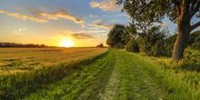 Wheat Field Along Old Oak Track