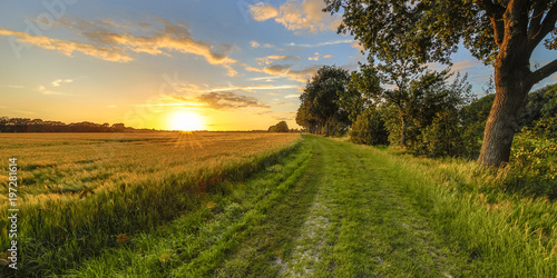 Foto op Canvas Cultuur Wheat field along old oak track