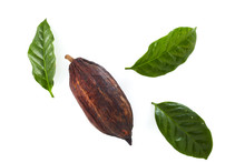 Cocoa Pods With Cocoa Leaf