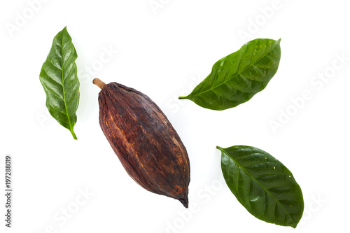 Cuadros en Lienzo  cocoa pods with Cocoa leaf