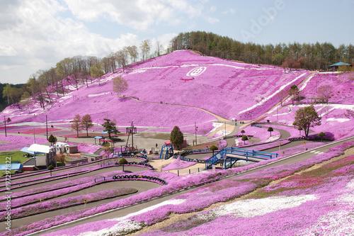 Tuinposter Purper spring park with ground pink flowers / 満開の芝桜公園