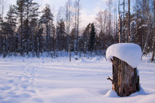 Nice View Of Lonely Stump Covered With Snow In Winter Forest With Pine Trees, Snow Field And Cloudy Blue Sky Background.