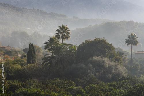 Foto op Aluminium Grijze traf. Orange trees in the Soler valley