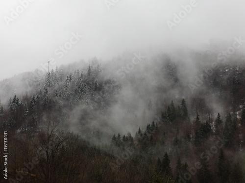 Papiers peints Noir Montagne de sapins dans la brume