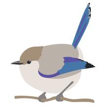 Fairy Wren Bird Vector Illustration Flat Style