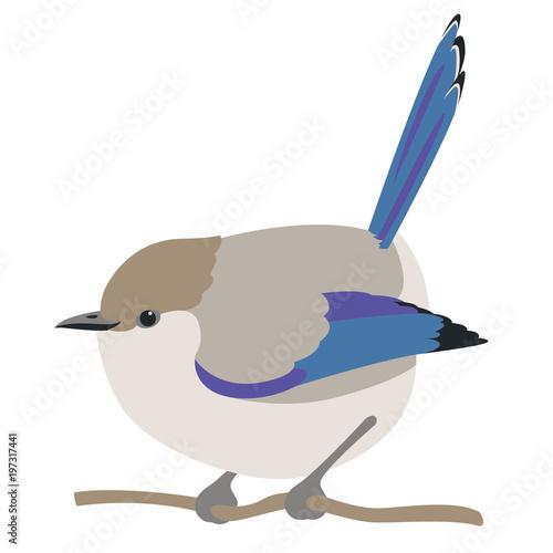 Fotografija fairy wren bird vector illustration flat style