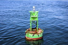 Sea Lions Lying On The Green Channel Marker Buoy And Seagull Sitting On Top Of It. Floating Beacon With Animals.