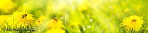 Montage in der Fensternische Lowenzahn Honey bees on summer flower meadow
