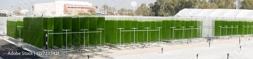 Algae growing plant Canvas Print