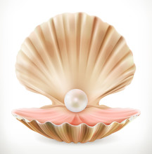 Shell With Pearl. Clam, Oyster...
