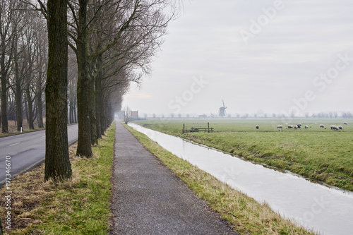 Foto op Aluminium Landschap Landscape in the Netherlands with bike path, small canal, sheep and a wind mill.