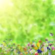 Leinwandbild Motiv Background with wild flowers
