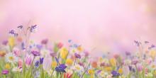 Background With Wild Flowers
