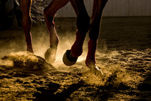 Detail Of A Horse Training Inside A Horseback Riding School In Romania, Dust And Back Light