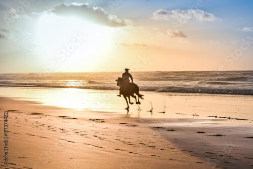 Stampa su Tela Horse Ride in front of the Sea in full Sunset, Moroccan coast, Casablanca, Moroc