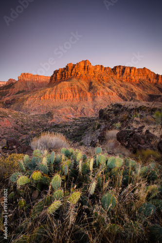 Poster Lavendel Zion mountains in evening light