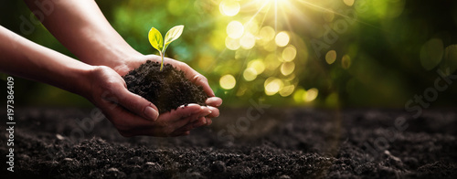 Poster Spring Plant in Hands. Ecology concept. Nature Background