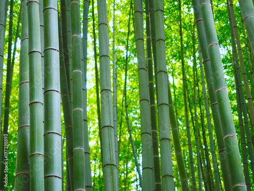 Foto op Plexiglas Bamboe Bambus Wald Hintergrund