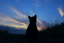 Silhouette Of Cat At Beautiful...