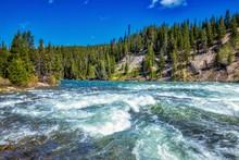 Yellowstone Wild