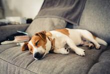 Dog Are Sleeping On The Sofa