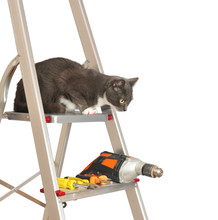 Metal Ladder With A Cat, Drill...