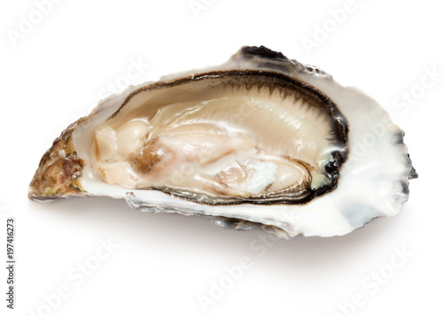 single opened ready to eat oyster isolated on white background Fototapeta