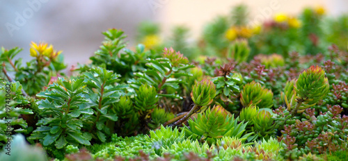 Photo  Urban Greening, Sukkulenten