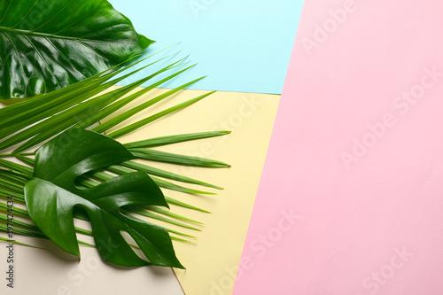 rozne-tropikalne-liscie-na-kolorowym-pastelowym-tle