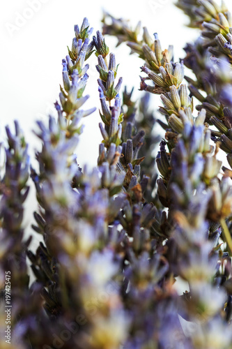 Lavender dried in natural light window daytime