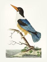Illustration Of Animal Artwork