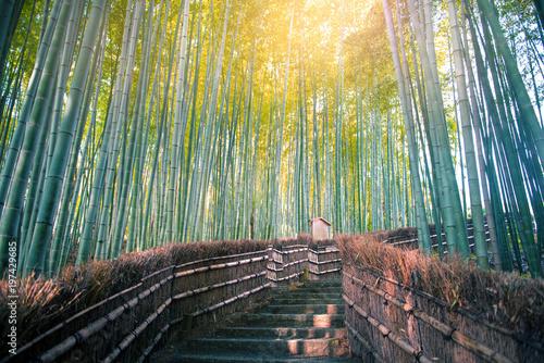 Poster de jardin Bambou Arashiyama bamboo forest in Kyoto, Japan.