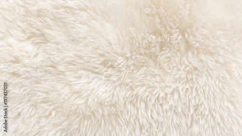 White wool texture background, cotton wool, white natural sheep wool, beige fluf Fotobehang
