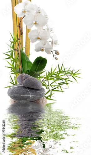 Valokuva bambou, orchidée blanche et galets avec reflets