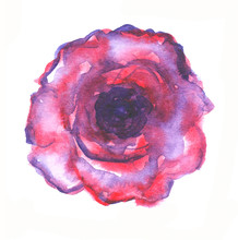 Hand Painted Element For Design. Watercolor Flower. Botanical Detail For Cards, Poster, Scrabooking, Web, Invitations.