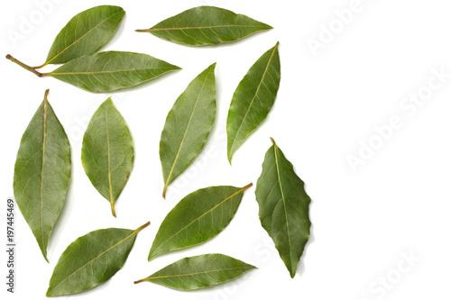 Fototapeta Laurel leaves isolated on a white background top view obraz na płótnie