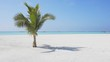 Solitary Palm Tree Growing in White Sand in the Maldives