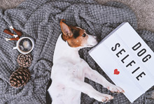 Adorable Jack Russell Terrier Dog And Mood Board With Text Dog Selfie