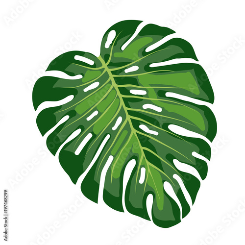liść tropikalny monstera