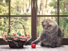 The Cat Plays With The Red Egg. A Basket Of Beautiful Easter Eggs
