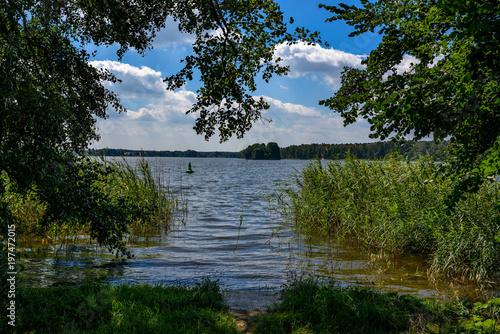 Sommerliche Uferlandschaft am Wanderweg um den Klein Köriser See im Brandenburge Poster